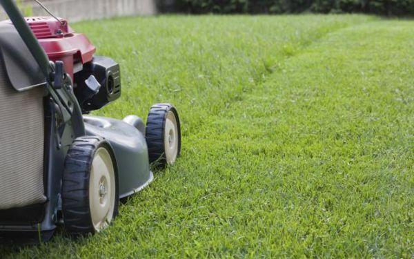 Koszenie trawnika. Czym i jak prawidłowo kosić trawę
