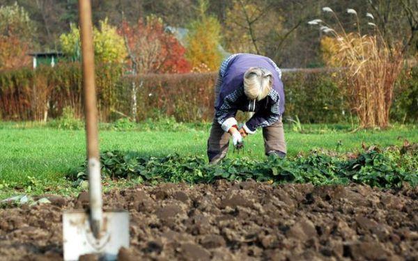 Przygotowanie gleby w ogrodzie przed zimą: jakie zabiegi wykonać jesienią