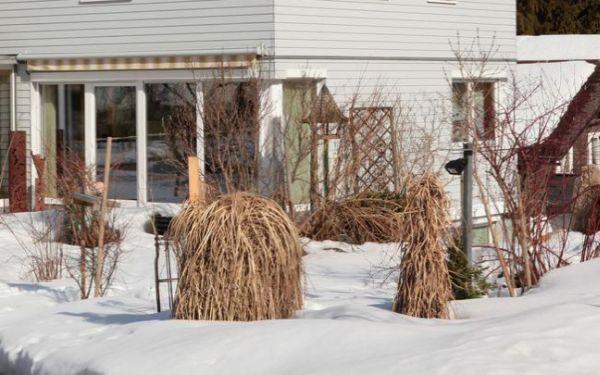 Luty w ogrodzie: przygotowanie ogrodu do nowego sezonu. Prace w ogrodzie w lutym
